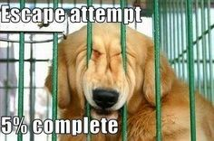You will never be able to escape from jail so just call us for some bail bond help. Call us today! 714.240.2245