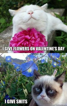 I Give Flowers On Valentine's Day. Tard The Grumpy Cat Gives Shits!