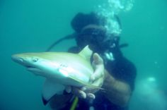 n this picture taken on September 3, 2011, an environmental activist releases a baby black-tip shark into the sea as part of an operation organised by the sharks protection group Dive Tribe off the coast of the southern Thai sea resort of Pattaya. (CHRISTOPHE ARCHAMBAULT/AFP/Getty Images)