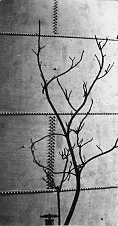 Andre Kertesz 1923 Modernist Tree