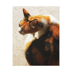 >>>Smart Deals for          Tricolor Cat Canvas Canvas Prints           Tricolor Cat Canvas Canvas Prints so please read the important details before your purchasing anyway here is the best buyReview          Tricolor Cat Canvas Canvas Prints today easy to Shops & Purchase Online - transfer...Cleck Hot Deals >>> http://www.zazzle.com/tricolor_cat_canvas_canvas_prints-192202320610474022?rf=238627982471231924&zbar=1&tc=terrest