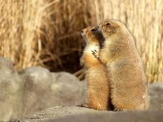 These prairie dogs will face the future together