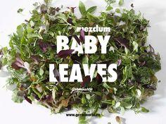 El Mézclum Baby Leaves es una mezcla de variedades de  brotes con la proporción perfecta en cuanto a color, textura, sabor y aroma que la hacen una mezcla muy apreciada entre los chefs. Su mezcla incluye amaranto, brócoli, col lombarda, hinojo, rúcula, kale rojo, komatsuna y mizuna. Calendula, Chefs, Leaves, Red Cabbage, Edible Flowers, Fennel, Shades Of Red, Sprouts, Vibrant Hair Colors