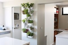 The Block Sky High: Room Reveal: wall garden The Block Glasshouse, Herb Wall, Peaceful Home, The Design Files, Interior Plants, Glass House, Interior Design Inspiration, Apartment Living, Home Renovation