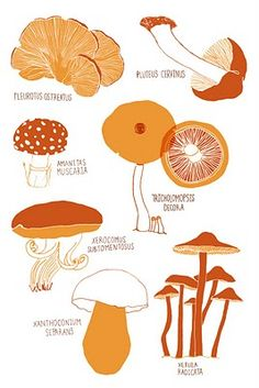 for the mushroom-foraging L's