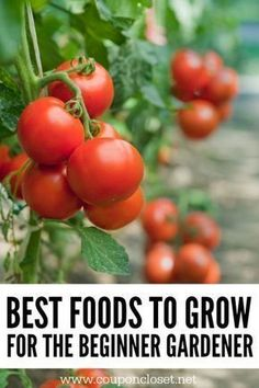 How to garden for beginners. - Gardening for Beginners - The best foods to grow for beginner gardening. These are easy foods to grow in the vegetable garden Gardening for healthy and aesthetic purposes!