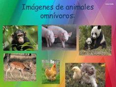 Clasificación de animales según su alimentación