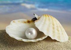Perla preciosa