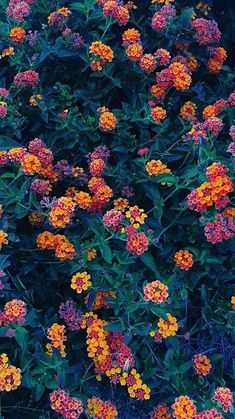 Wallpaper Macbook Nature Flower- Wallpaper Macbook Nature Flower The Effective Pictures We Offer You About flower wallpaper laptop A quality p Flower Iphone Wallpaper, Flower Background Wallpaper, Sunflower Wallpaper, Cute Wallpaper Backgrounds, Tumblr Wallpaper, Pretty Wallpapers, Flower Backgrounds, Nature Wallpaper, Screen Wallpaper