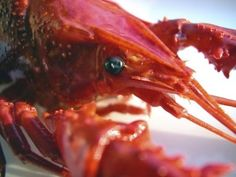 How to Cook Crayfish Tails