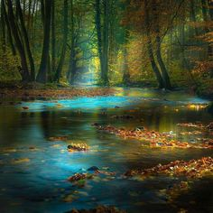 Magic-Light-in-the-Spessart-Germany.jpg (719×719)