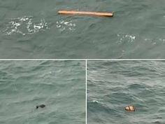 AirAsia plane search: Objects spotted http://www.apnewscorner.com/news/news_detail/details/7580/latest/AirAsia-plane-search-Objects-spotted.html