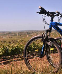 AVENTURA EN BICICLETA ¿En qué otro lugar podrías disfrutar de una aventura en bicicleta como entre nuestros olivares? http://experienciasgarzon.com/site/?page_id=137&lang=es