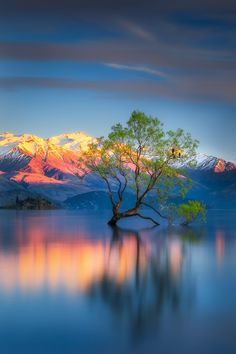 The lone Tree - beautiful Lake Wanaka, South Island, New Zealand ~ Amazing Photography, Landscape Photography, Nature Photography, Photography Tips, Photography Courses, Photography Camera, Underwater Photography, Letter Photography, Photography Hashtags