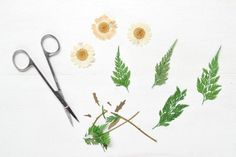 Prepping flowers and fern leaves. DIY Pressed Flower Phone Case | @eHow