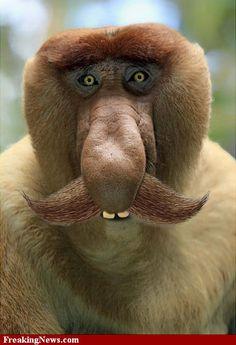 monkey | Funny Monkey Pictures - Strange Pics - Freaking News