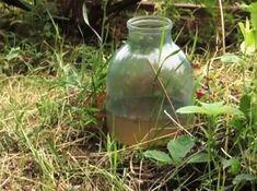 Фотография Vase, Gardening, Garden Plants, Lawn And Garden, Vases, Horticulture, Jars