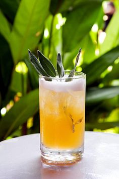 "Combine sage, tequila, agave nectar and lemon juice to create this cocktail, known as ""Your Sageness."""
