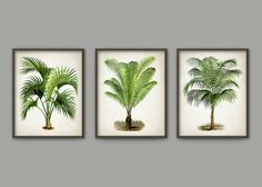 Palm Tree Botanical Wall Art Print Set of 3 by QuantumPrints
