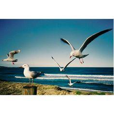 Sélection Instagram #74 // © Michael Garbutt // Retrouvez la sélection complète sur le site de #FisheyeLeMag ! #instagram #curation #photo #photography #beach #plage #sea #landscape #seagull #seagulls #mouettes #photooftheday #picoftheday #potd