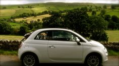 Fiat 500 & The Dog