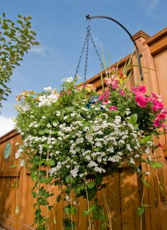 List of hanging basket flowers that don't need a lot of sun