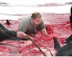 *** PLS SIGN AND SHARE *** Stop the Faroe Island Whale Slaughter! - The Petition Site
