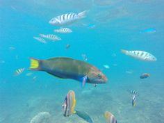 snorkeling off the shore of Rakata Patent Filing, Modern Times, Snorkeling, Holiday, Diving, Vacations, Holidays, Vacation, Scuba Diving