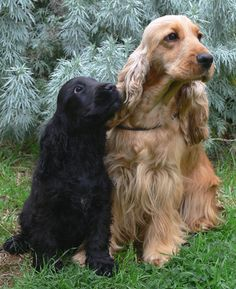 Cute pups - just like my Bear & Bella