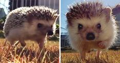 Slow motion makes cool things look cooler, but when you try it on someone as cool as Choco the hedgehog, prepare for a storm. And by that, we mean that this video has taken Facebook by storm with 2M views on our channel.
