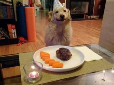 This dog's birthday dinner, which strangely enough looks better than anything I've eaten recently: | The 35 Happiest Things That Have Ever Happened