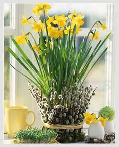 Spring daffodils, pussy willow, and eggs, table centerpiece idea Easter Flower Arrangements, Easter Flowers, Spring Flowers, Floral Arrangements, Shell Centerpieces, Easter Centerpiece, Shell Candles, Narcisse, Spring Sign