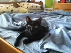 Louie relaxing on  a Sunday morning-photo by cedes buck