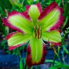 Cliffjumper - (Gossard, James) 2017 introduction - (Rose F Kennedy) x (Time Stopper) #DIYflowerBedGardenIdeas #GardenIdeas