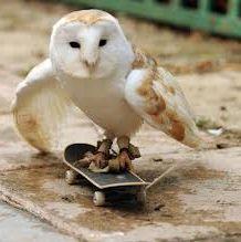 skateboarding owl photo funny
