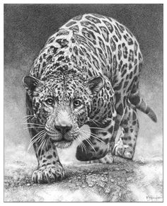 Wildlife Jaguar wall art jag picture animal panther posters sketch drawing print  | eBay