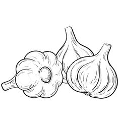 Garlic Clipart and Stock Illustrations. Garlic vector EPS illustrations and drawings available to search from thousands of royalty free clip art graphic designers. Vegetable Coloring Pages, Fruit Coloring Pages, Coloring Books, Vegetable Drawing, Object Drawing, Halloween Drawings, Easy Drawings, Vector Art, Eps Vector