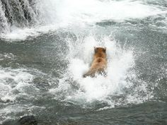 Belly Flop | Flickr - Photo Sharing!