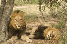 River African Safari | Lion Sands River Lodge, Sabi Sand Game Reserve - South Africa Safari