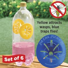 Fatal Funnel Wasp and Fly Traps