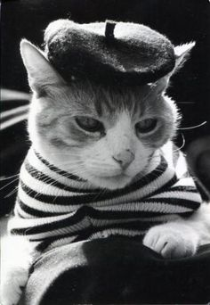 """""""French..."""" too sexy for my stripes...too sexy for my hat...TOO SEXY!"""