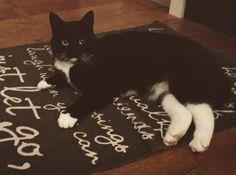 Onze lieve Kitty #kleedje #poes #kat #cat #blackandwhite #lechat #love #kitchen #keuken #lacuisine #home #koesfabriek