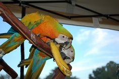 Unsafe Foods For Parrots - Good article on what parrots can and cannot eat.