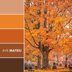 Gorgeous fall colors accent the cemetary Color Palette #387 – Ave Mateiu - Fall Autumn 2020, color palette, color palettes, colour palettes, color scheme, color inspiration, color combination, art tutorial, collage, digital art, canvas painting, wall art, home painting, photography, weddings by color, inspiration, vintage, wallpaper, background, rustic, seasonal, season, natural, nature