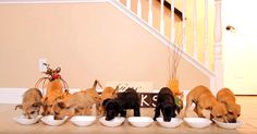 Shelter Pups Get A Home Cooked Holiday Feast Then Go Into A Food Coma