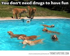 These dogs are having a blast…