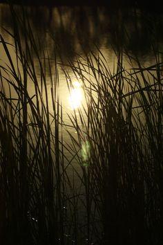 Solar eclipse through the cattails