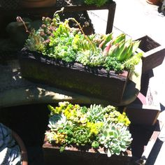 Obsessed with succulents - I need to replant mine in one big planter!