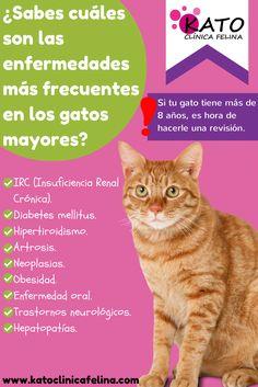 Lista de enfermedades más frecuentes en gatos mayores. A continuación os dejamos una infografía donde podréis encontrar las enfermedades más frecuentes en gatos mayores: - Insuficiencia renal crónica - Diabetes Mellitus - Artrosis - Neoplasias - Obesidad - Enfermedad oral - Trastornos neurológicos - Hepatopatías  Most common diseases in older cats.