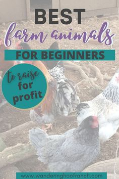 What are the best farm animals to raise for beginner homesteaders to make a profit? In this post I share with you the animals that you have to consider having on your homestead as a beginner. Raising Rabbits For Meat, Raising Farm Animals, Raising Ducks, Raising Backyard Chickens, Farm Kids, Farm Business, List Of Skills, Urban Homesteading, Hobby Farms